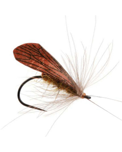CADDIS WING