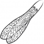 ADULT STONEFLY WING